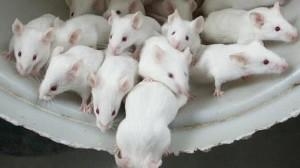 ratones--575x323